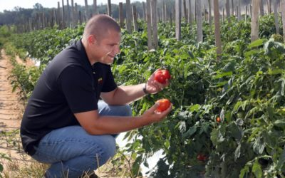 Harsher climate a challenge to New Jersey tomato farmers. Here's how they're adapting