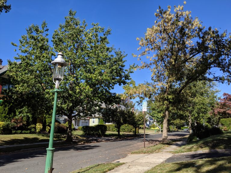 Why Seton Hall Students Are Counting South Orange Trees