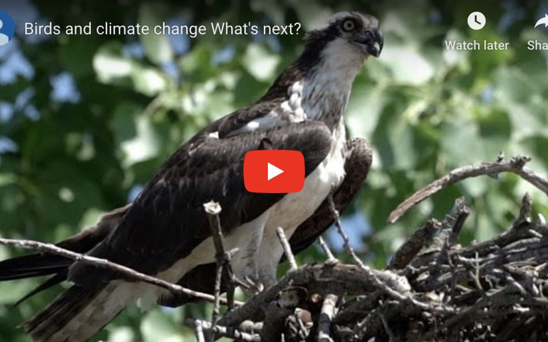 How has climate change affected birds in South Jersey?