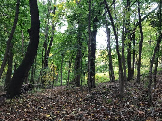 These woods were a local philanthropist's oasis. Now they're preserved for all to enjoy