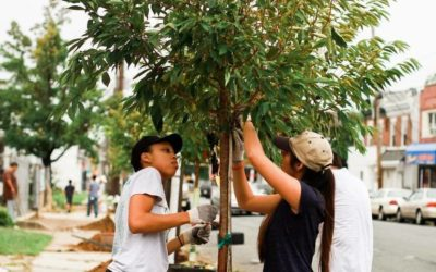 Camden's Tree-Planting Season Detoured by COVID-19: 150 Reasons to Hope