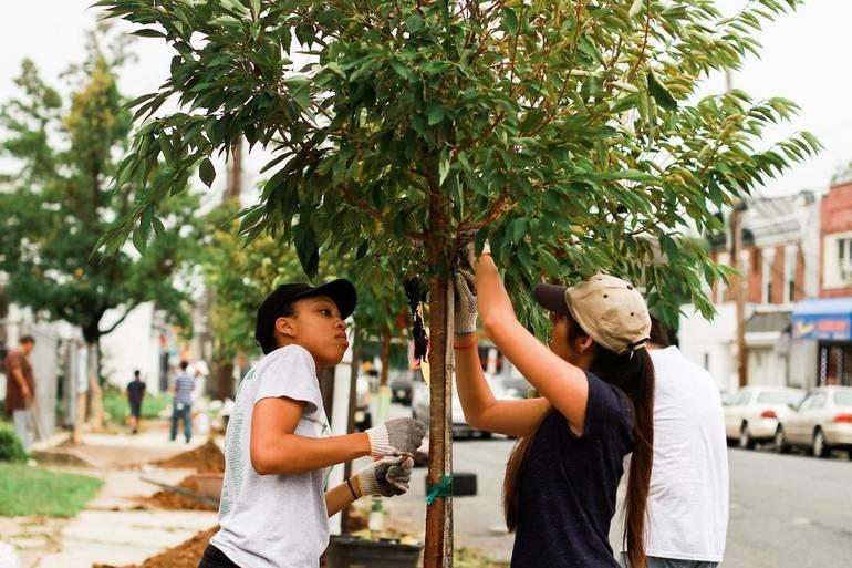 Camden's Tree-Planting Season Detoured by COVID-19: 150 Reasons to Hope