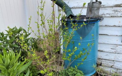 Saving for a Not-so-Rainy Day: Rain Barrel Workshop Goes Virtual, but the Project Continues